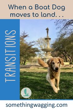 Our cruising boat dog is living on land--for now. Read about the transition here. Dogs On Boats, Walking City, Work Opportunities, Best Mate, Kinds Of Dogs, Therapy Dogs, She Likes, Old Dogs, Say Hi
