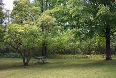 A wide spectrum of trees fits the bill for fast-growing, shade-providing staples in the yard. Read this guide to find the perfect trees for your yard. Best Shade Trees, Fast Growing Shade Trees, Growing Tree, Garden Projects, Garden Ideas, Short Trees, Arbor Day Foundation, Boat Propellers, Backyard Trees