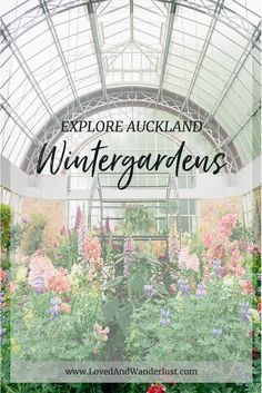 Spring in Wintergardens, Auckland Domain - Loved and Wanderlust New Zealand Travel, South Island, Travel Information, Auckland, Adventure Travel, Travel Inspiration, Explore, Life, Blog