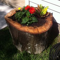 Flower pot = tree stump