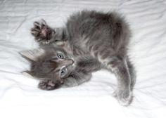 wttilcock › Kitten Collection  Scaredy Cat