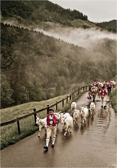 Alpenaufzug / la randonné des vaches / Farmers bringing their Cows & Sheep up to the Hills for the Summer. What A Wonderful World, Beautiful World, Beautiful Places, Bergen, Great Places, Places To See, Europe Centrale, Voyage Europe, Swiss Alps