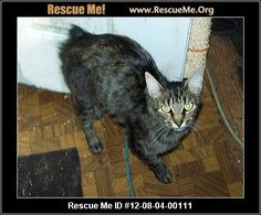— California Manx Rescue — ADOPTIONS — RescueMe.Org