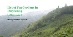 List of Tea Gardens in Darjeeling – A to B