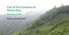 List of Tea Gardens in Darjeeling – A to B
