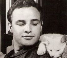 Photo of Marlo Brando,with cat. :)  from  http://favim.com/image/84677/