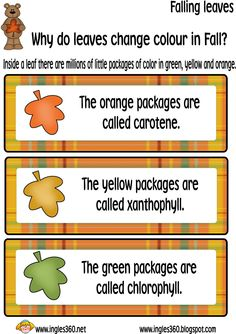 Ingles360: Why do leaves change colour in Fall?