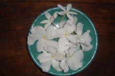 Bhud Flowers in Sri lanka. Coconut Flakes, Sri Lanka, Grains, Spices, Shots, Flowers, Food, Meal, Essen