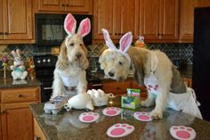 Dog Bunnies Color Easter Eggs | GBGV | Monday Mischief | mygbgvlife