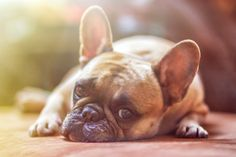 Here are some of the main things you need to know in order to keep your dog healthy.