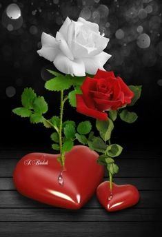 Red rose with white rose Beautiful Rose Flowers, Romantic Roses, Love Rose, Love Heart Images, Rose Images, Hearts And Roses, Red Roses, Happy Birthday Cake Writing, Rose Flower Wallpaper