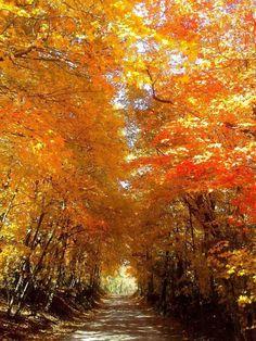 Őszi tájkép Columbia, Missouri
