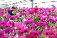 불멸의 꽃을 활짝 피워가며 -김일성화김정일화전시관에서-
