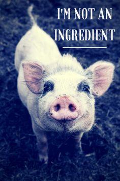 Love animals. Don't eat them.