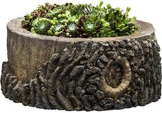"super cool 14"" tree trunk planter for outside or inside"