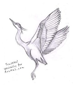 How to draw a heron step 5
