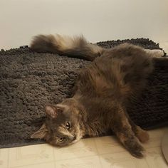 I think you have a new mascot. Forgot to put it up and she claimed it as her new bed. Lisa Green, Paper Book, Senior Living, New Beds, Tortoise Shell, Cats Of Instagram, About Me Blog, Animals, Animales