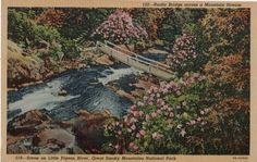 Little Pigeon River, Great Smoky Mountains, Vintage Postcard