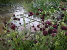 wet slate   ---   Stanmore garden design - naturalistic water garden