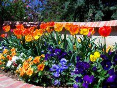 Garden Landscape Flowers And Flower Garden Design Pictures Furniture Garden Bulbs, Garden Shrubs, Landscaping Plants, Front Yard Landscaping, Lawn And Garden, Big Garden, Landscaping Design, Garden Bed, Garden Plants