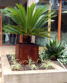 13.10.2014. Had a lot of work done in the garden today. Planted 2 new large trees and planted a large cycad in a pot next to the kitchen door. Looks great - amazing how much can be achieved when there are a few people working! It's really nice to get things finished.