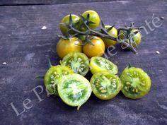 Semences Tomate Cerise Raisin vert