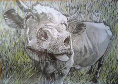 Bessie - Drawing