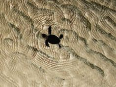 A Turtles Journey