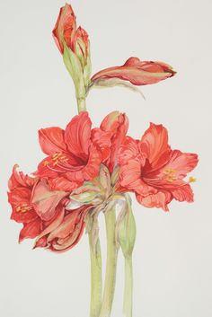 Houseplants for Better Sleep Gianna Tuninetti Lily Painting, Painting & Drawing, Plant Illustration, Botanical Illustration, Botanical Flowers, Botanical Prints, Watercolor Flowers, Watercolor Paintings, Watercolour