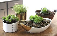 Easy Succulent Gardening