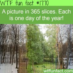 A picture in 365 slices, each day of the year -WTF fun facts