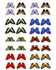 my butterfly collage sheet