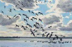 sir_peter_markham_scott_white-fronts_whiffling_down_onto_flood_water_d5640739h.jpg (340×222)