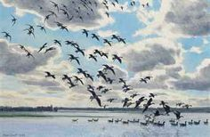 sir_peter_markham_scott_white-fronts_whiffling_down_onto_flood_water_d5640739h.jpg (340×222)