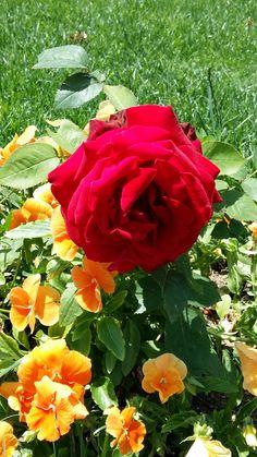 Bir Yâr-i Sıddîk Anlar Halden, Aşk Dersini Alır GÜL'den, Hiç Riyâsız Tam GÖNÜL'den, Seven Dostlara SELAM Olsun..!