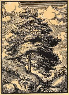Recto Tree on slopes of vegetation. Woodcut, on oriental paper © The Trustees of the British Museum White Pen, Black And White, Conceptual Art, British Museum, Printmaking, Greece, Oriental, Ink, Fine Art