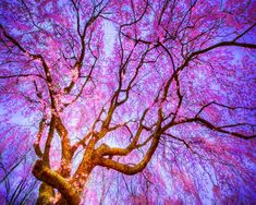 nice 30+ Captivating Spring Nature Scenery