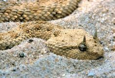 """As Iraq runs dry, a plague of snakes is unleashed....The Tigris and Euphrates rivers are drying up..The Bible predicts that Euphrates River would be dried up in the last days. The Bible predicts that the """"Kings of the East"""" would travel through the dried up Euphrates to the Valley of Armageddon.  Revelation 16:2...Revelation 9:14-16..."""