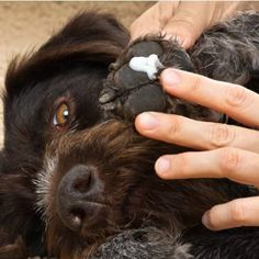 Wondering how can you make your dog smell better without a bath? Here are 7 tips get rid of that stinky dog smell from your house. Dog Houses, House Dog, Stinky Dog, Dog Breath, Dog Smells, Interactive Dog Toys, Dog Pee, Dog Nails, Aggressive Dog