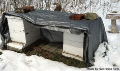 Location, Location, Location: Where to Put Your Beehives - Homesteading and Livestock - MOTHER EARTH NEWS