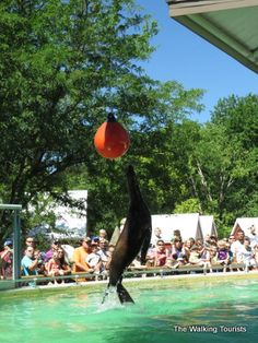 Great Midwest zoo in Des Moines - Blank Park Zoo