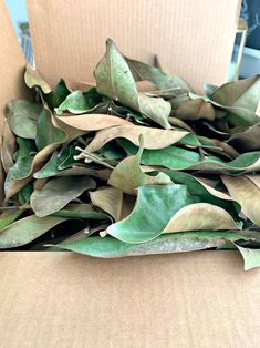 Make this super easy and cheap DIY magnolia wreath, using real magnolia leaves, for your holiday front door. It would also make a great Christmas gift. Magnolia Wreath, Magnolia Leaves, Magnolia Flower, Wreaths And Garlands, Xmas Wreaths, Christmas Decorations, Its Christmas Eve, Great Christmas Gifts, Christmas Ideas