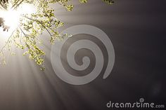 Rays Of Light In Fog - Download From Over 31 Million High Quality Stock Photos, Images, Vectors. Sign up for FREE today. Image: 51136111