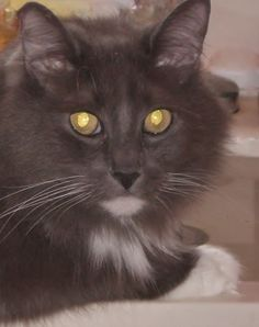 Jasper.  What a sweet boy!  Look at those whiskers.  I was blessed to have him for eighteen wonderful years. :)
