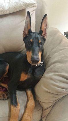 Oh those ears!