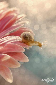 a Snail by Etha Ngabito