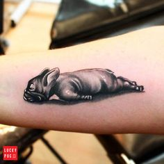 French bulldog tattoo by New Image Ink Portadown