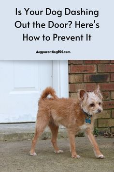 Having a dog that runs out the door is a tragic accident waiting to happen. You need to stop it before it's too late. #doordashing #dogsafety #trainyourdog Millionaire Lifestyle, Pet Sitters International, Group Of Dogs, Dog Health Care, Cute Dog Photos, Dog Safety, Dog Runs, Pet Costumes, Animals And Pets