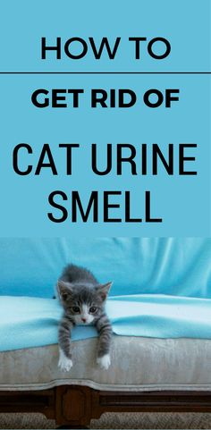 How To Get Rid Of Cat Urine Smell (1)