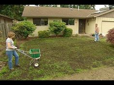 Restore a Patchy, Weedy Lawn to Its Former Glory with a Few Simple Tricks - DIY & Crafts